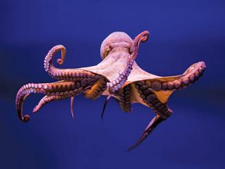 Offense: A Spiritual Octopus
