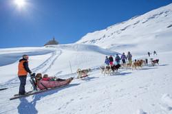 Chiens de traineaux au Mont Cenis
