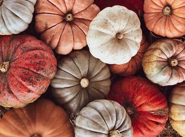 october pumpkins nuetral.jpeg