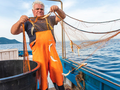 Auf dem Meer mit dabei: Fischfang hautnah