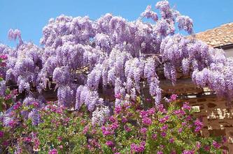 Fotowettbewerb: Ihre schönsten Blumenbilder