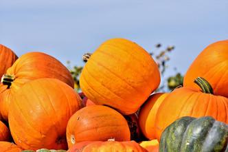 Herbstlich bunt und lecker: Kürbis-Risotto alla Lucia