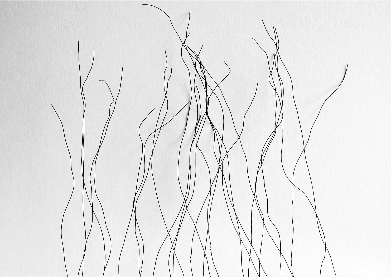 Susurro de las ramas