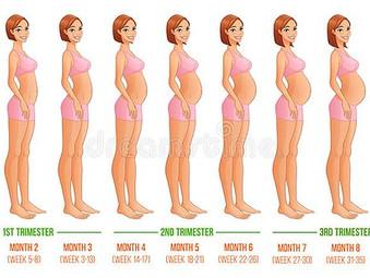 ¿Qué sucede en el vientre antes de que el bebé esté listo para nacer? Parte 2