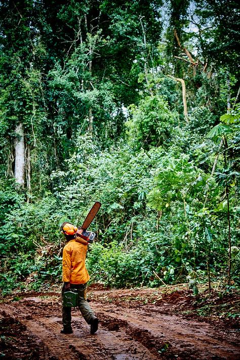 Cameroon_DSF6464.jpg