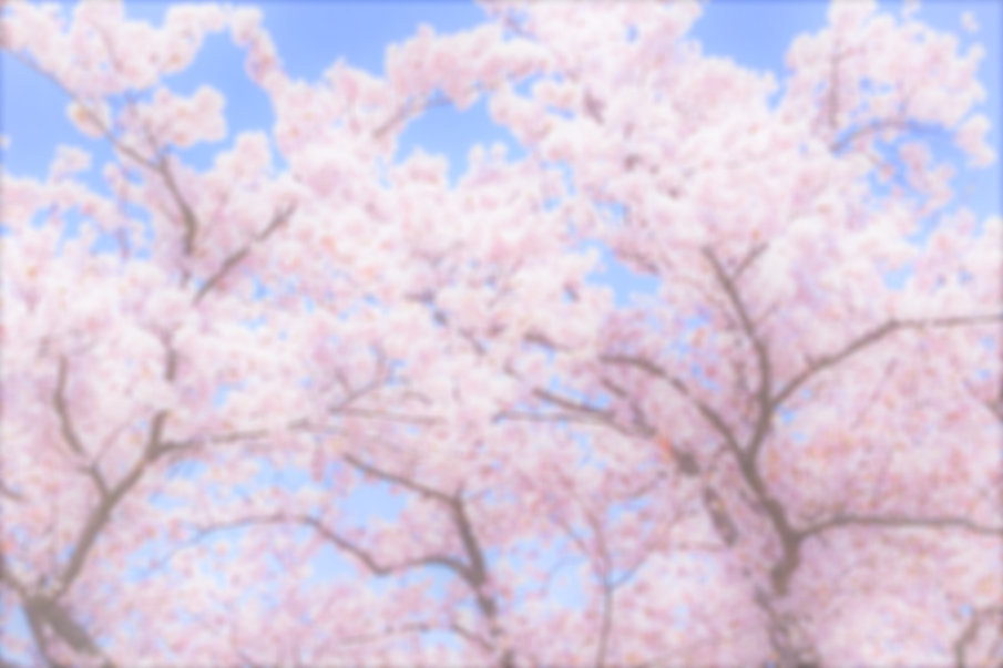 cherry%20blossoms%201%20edited_edited.jp