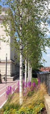 The Convention Venue Piazza