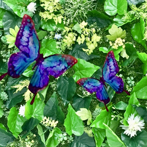 蝶はあの世からの使者