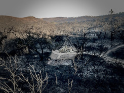 Wildfire2020 - 10.jpeg