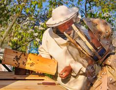 teach-kids-about-bees.jpg