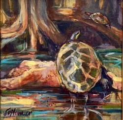 Lazy Turtles