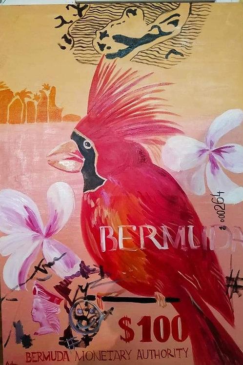 100 Dollar Bermuda
