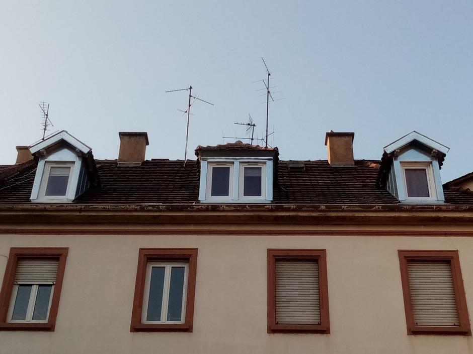 chien assis_drone&toit.jpg