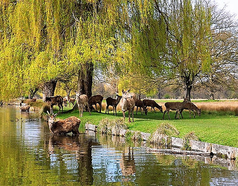 Deerat Royal Bushy Park
