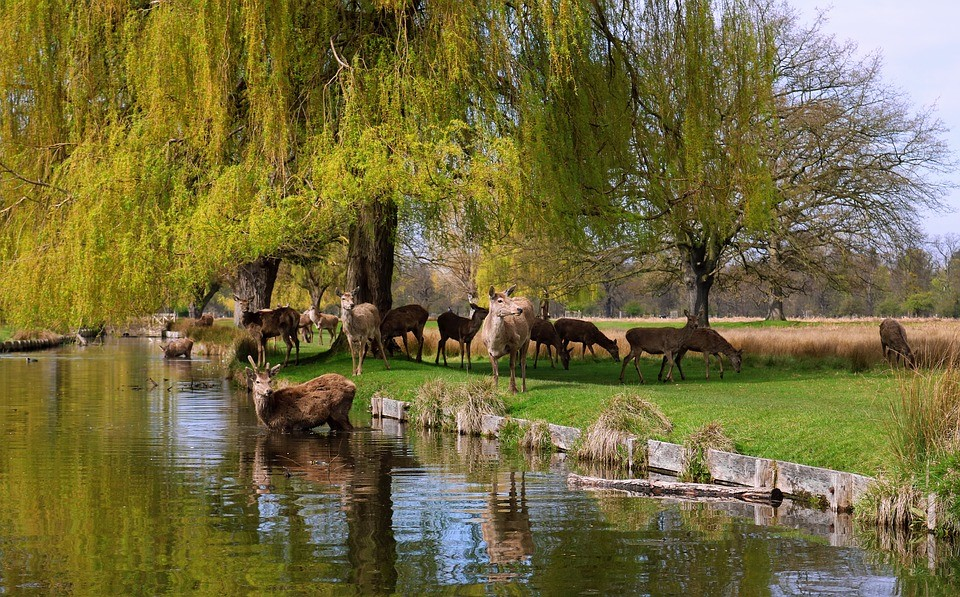 Royal Bushy Park
