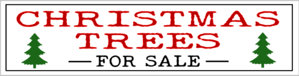 L22- christmas trees for sale