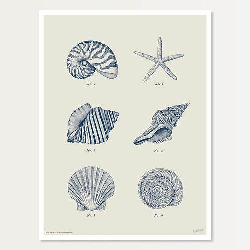 Shell Specimens in Navy Art Print 18x24