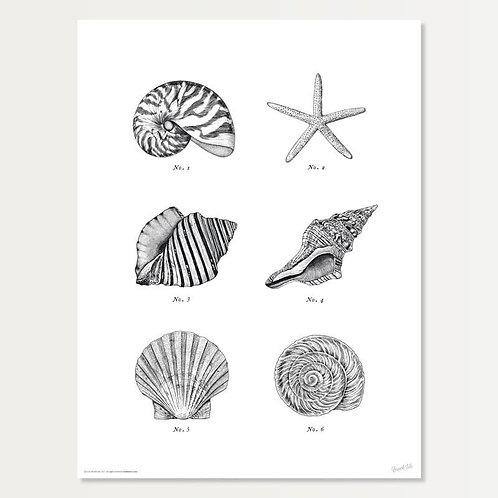 Shell Specimens in Black Art Print 18x24