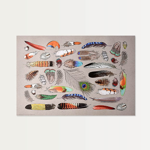 Plumes Collection Paper Placemats