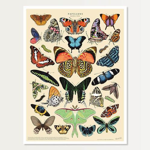 Papillon Specimen Art Print 18x24