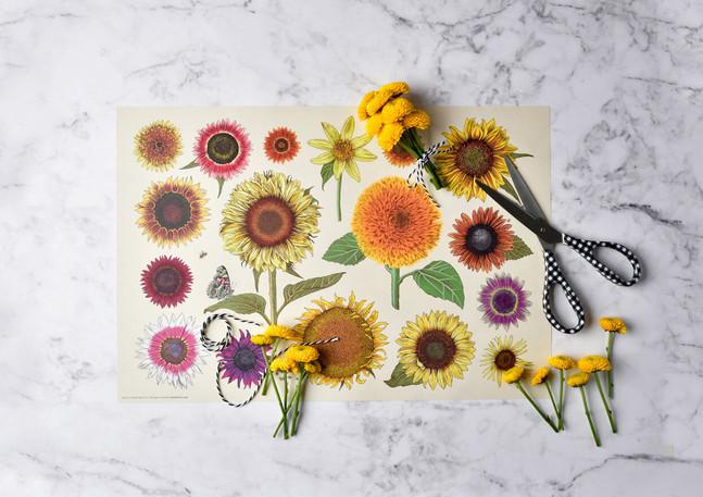 SunflowerPaperMat.jpg