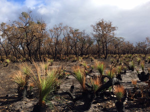 Helping wildlife respond to bushfires and a changing climate