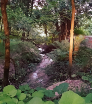 photo-20190806-141417.png