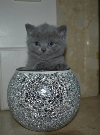 Kitten in a vase