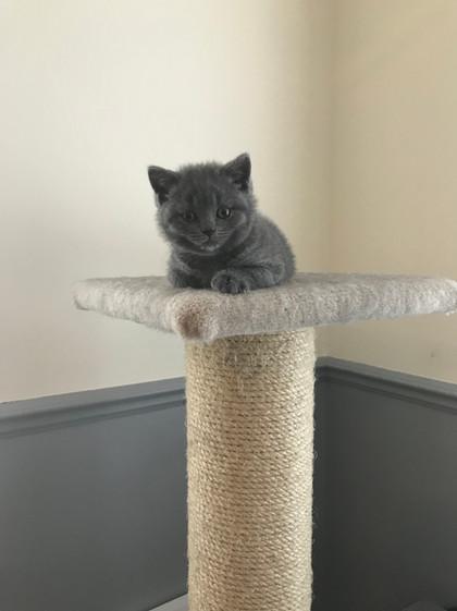 Kitten on the Monty