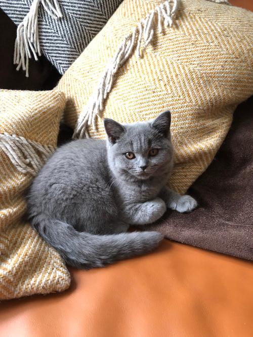Bear Jr as a kitten