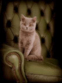 Loki on Chair.jpg