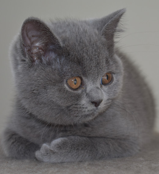 Thoughtful Kitten