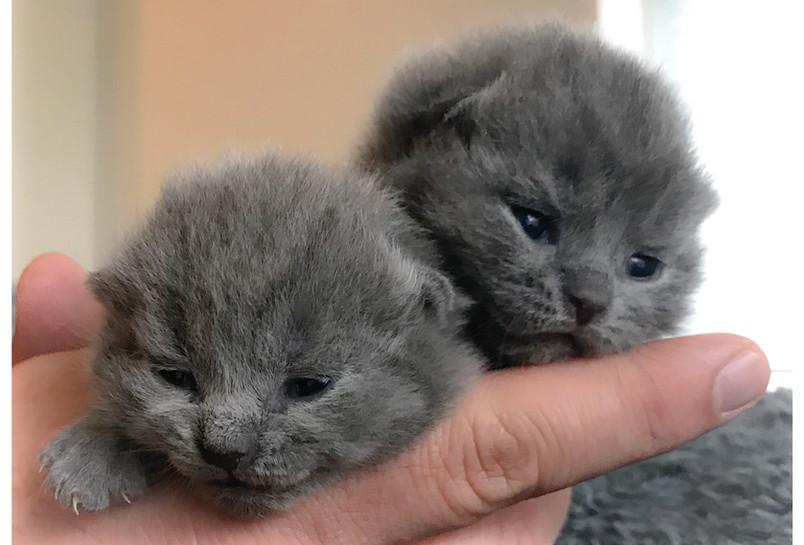 Week Old Kittens
