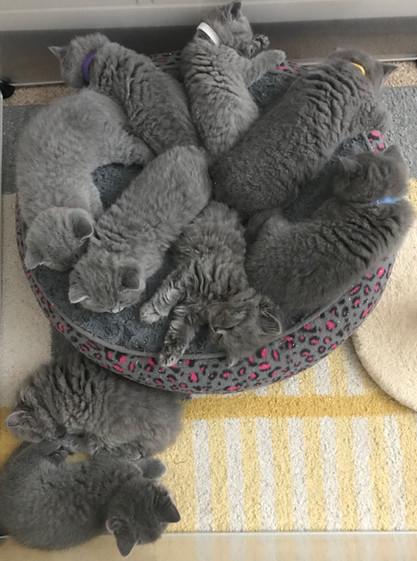Kitten Wheel