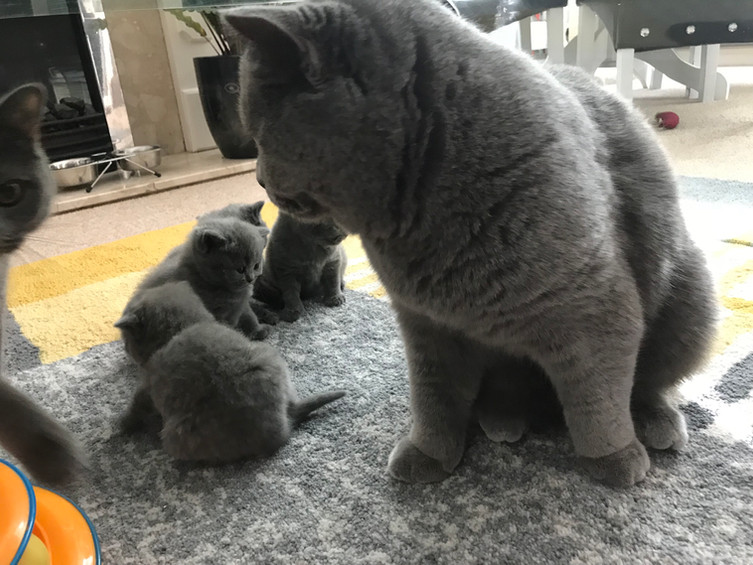 Bear with his Kids