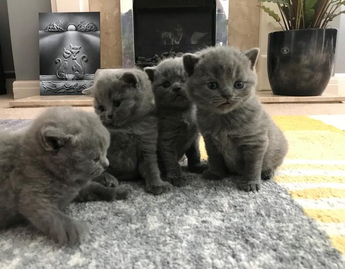 Sibling kittens