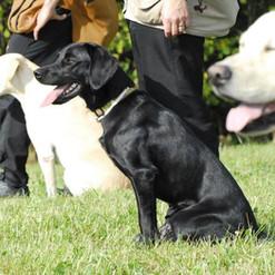 3 Hunde.jpg