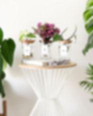 plantscene1HR.jpg