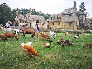 La ferme animaux.jpg