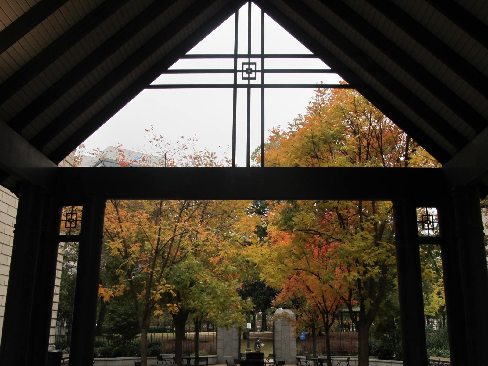 Autumn Trees from Gazebo Window