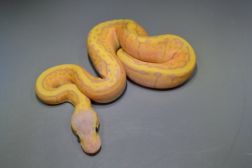 Pastel Banana Pin