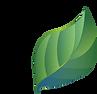leaf-1821763.png