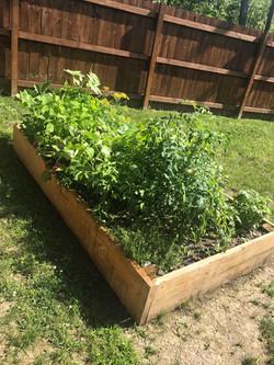 Garden Box 2