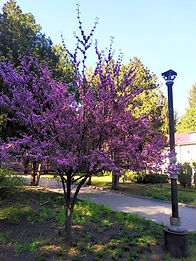 photo_2020-04-28_19-36-50_edited.jpg