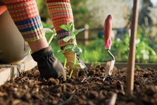 Gardening and Pain