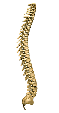 3 Conditions Treated by a Dover Delaware Chiropractor