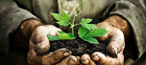Grow.-Plant.-Discipleship.jpg