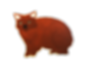 Wombat_edited.png