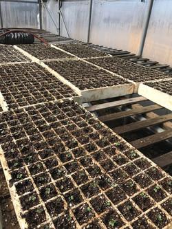 Getting Plants Ready