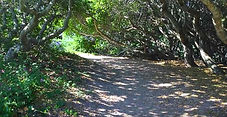 Coon Creek Canyon trail, Los Osos